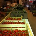 Les 1ères tomates sont arrivées