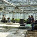 Préparations des plants de poireaux
